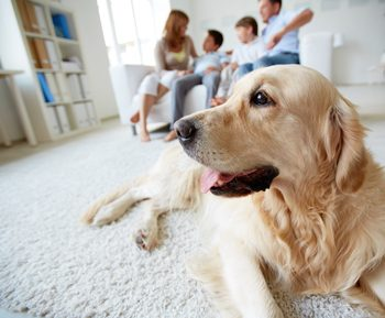 Pet Odor Urine Removal Baton Rouge